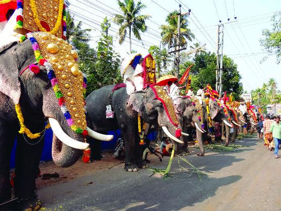 DSC04988 temple elephants in line_2WEB