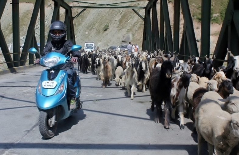 Anam Hashim and the TVS Scooty Zest 110 in Ladakh (12)